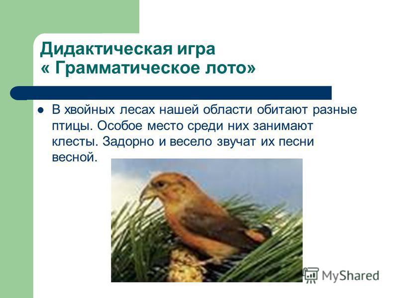 Дидактическая игра « Грамматическое лото» В хвойных лесах нашей области обитают разные птицы. Особое место среди них занимают клесты. Задорно и весело звучат их песни весной.