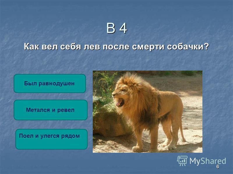 6 В 4 Как вел себя лев после смерти собачки? Метался и ревел Был равнодушен Поел и улегся рядом
