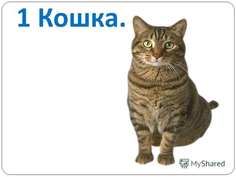 1 Кошка.