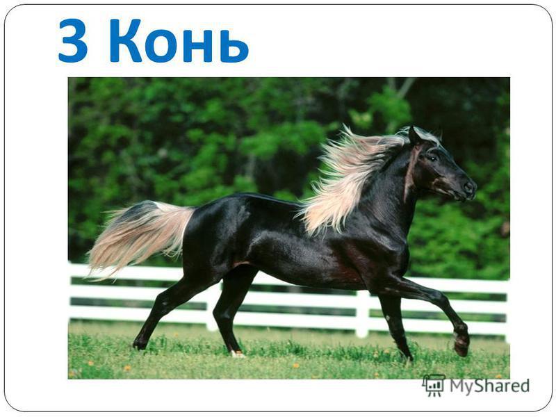 3 Конь
