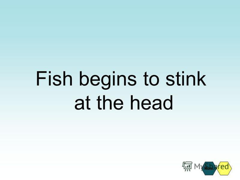 Fish begins to stink at the head Rus.