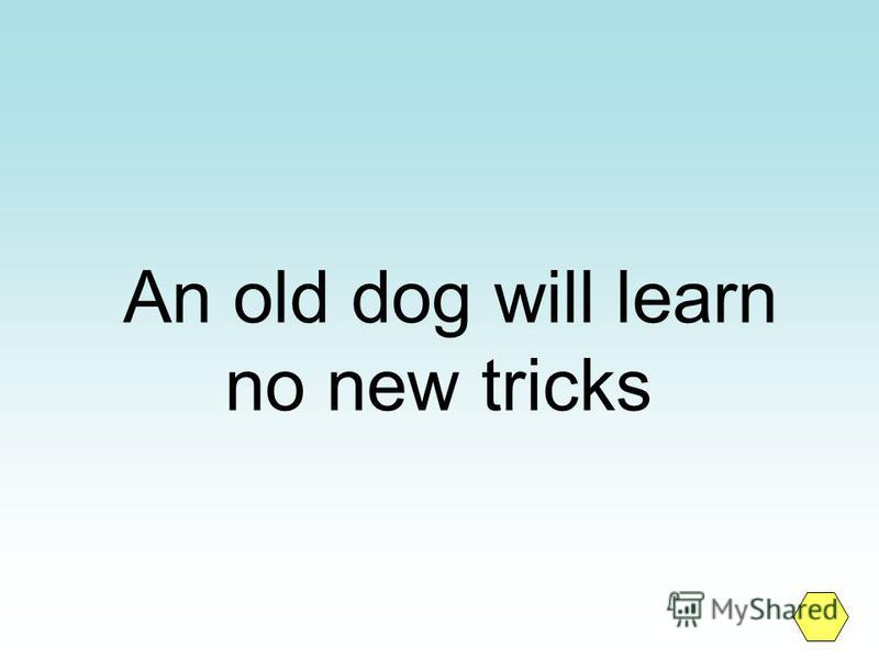 An old dog will learn no new tricks