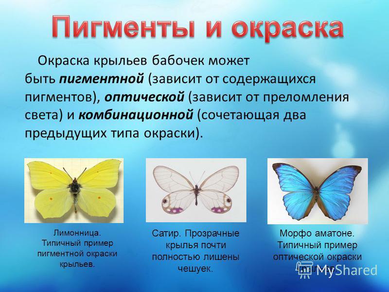 Окраска крыльев бабочек может быть пигментной (зависит от содержащихся пигментов), оптической (зависит от преломления света) и комбинационной (сочетающая два предыдущих типа окраски). Лимонница. Типичный пример пигментной окраски крыльев. Сатир. Проз