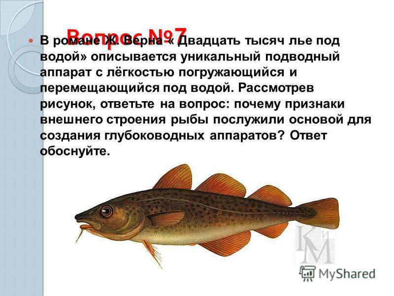 Вопрос 7 В романе Ж. Верна « Двадцать тысяч лье под водой» описывается уникальный подводный аппарат с лёгкостью погружающийся и перемещающийся под водой. Рассмотрев рисунок, ответьте на вопрос: почему признаки внешнего строения рыбы послужили основой