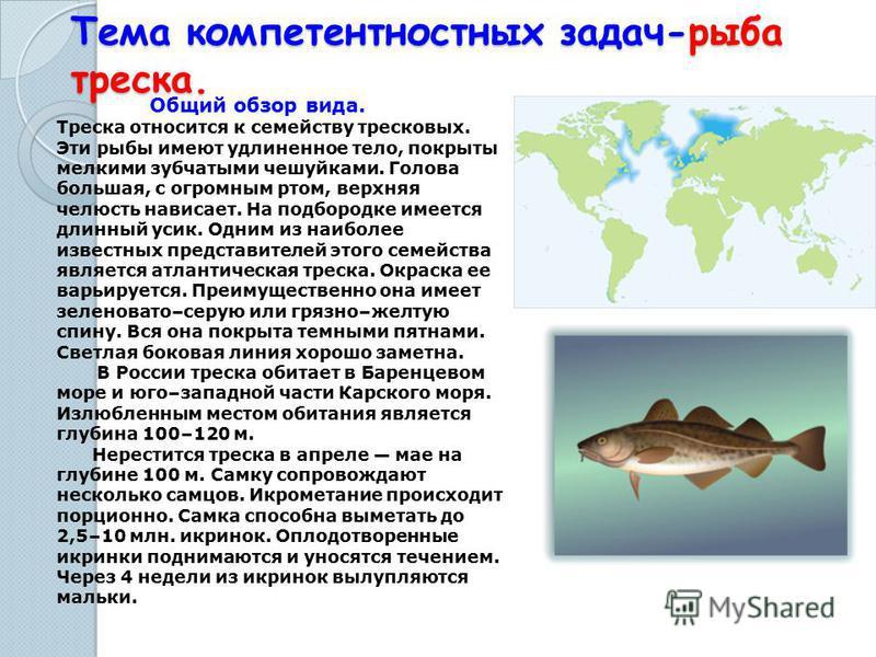 Тема компетентностных задач-рыба треска. Общий обзор вида. Треска относится к семейству тресковых. Эти рыбы имеют удлиненное тело, покрыты мелкими зубчатыми чешуйками. Голова большая, с огромным ртом, верхняя челюсть нависает. На подбородке имеется д