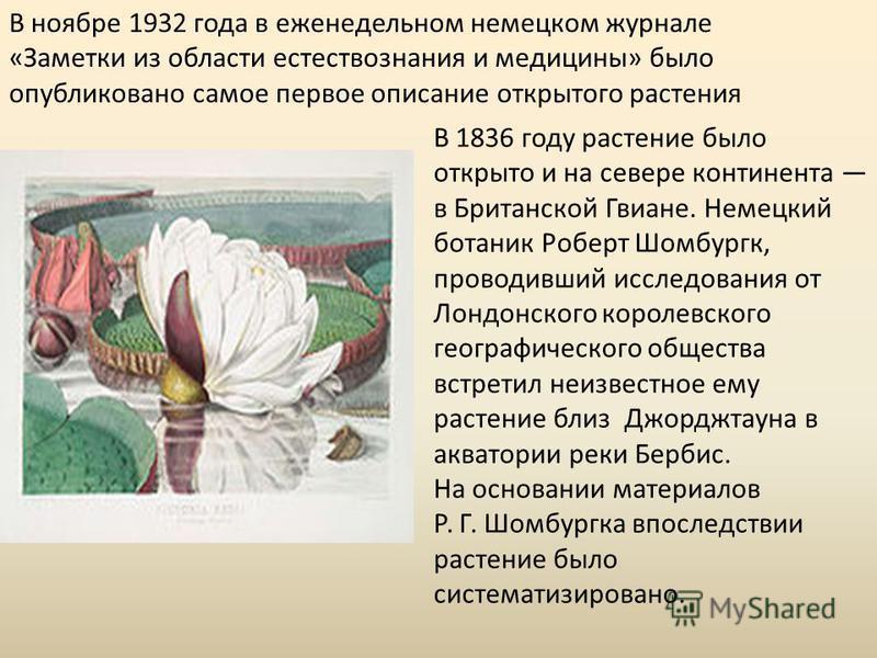 В ноябре 1932 года в еженедельном немецком журнале «Заметки из области естествознания и медицины» было опубликовано самое первое описание открытого растения В 1836 году растение было открыто и на севере континента в Британской Гвиане. Немецкий ботани
