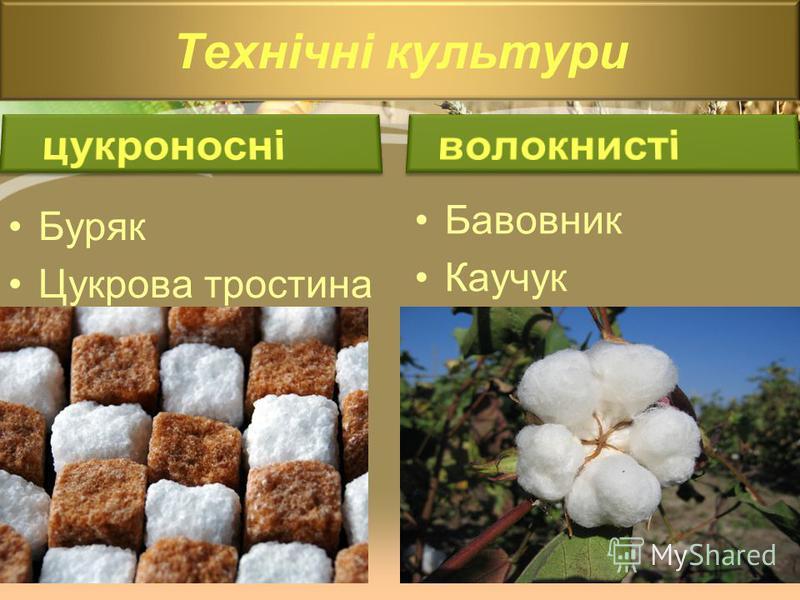 Технічні культури Буряк Цукрова тростина Бавовник Каучук
