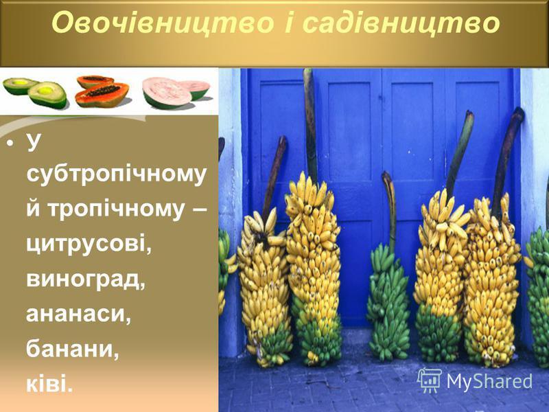 У субтропічному й тропічному – цитрусові, виноград, ананаси, банани, ківі. Овочівництво і садівництво