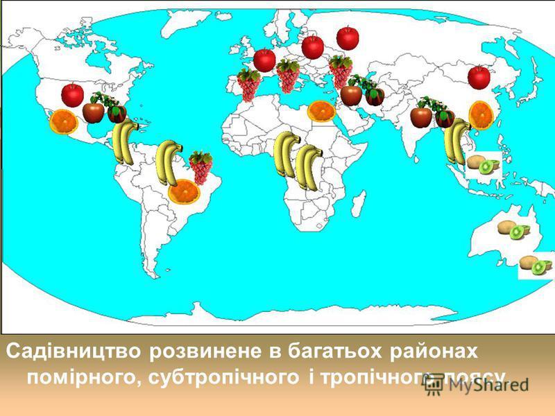 Садівництво розвинене в багатьох районах помірного, субтропічного і тропічного поясу.