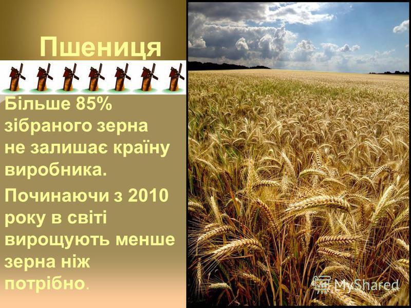 Пшениця Більше 85% зібраного зерна не залишає країну виробника. Починаючи з 2010 року в світі вирощують менше зерна ніж потрібно.
