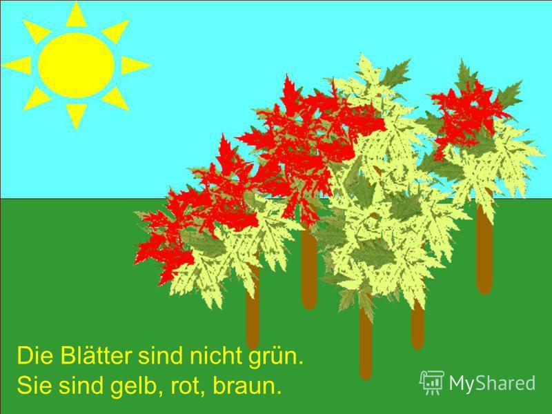 Die Blätter sind nicht grün. Sie sind gelb, rot, braun.