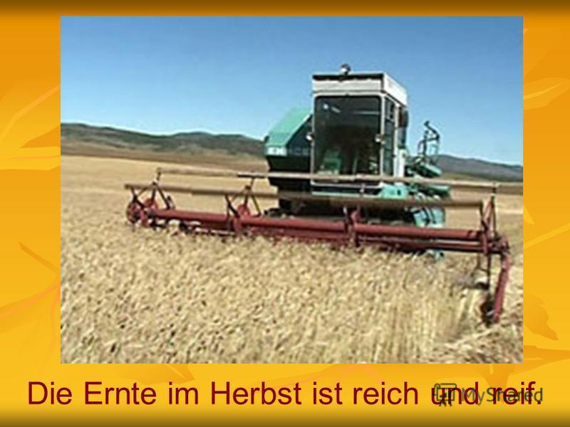 Die Ernte im Herbst ist reich und reif.