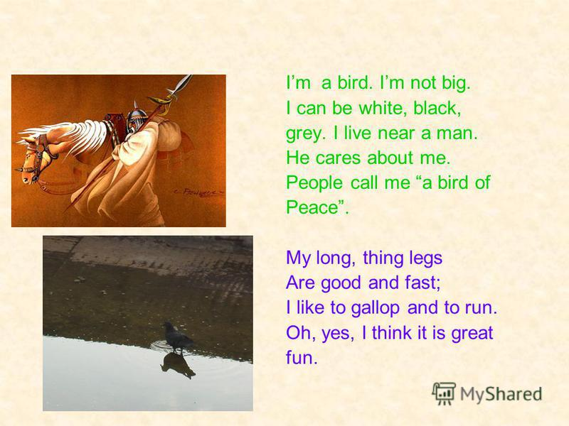 Im a bird. Im not big. I can be white, black, grey. I live near a man. He cares about me. People call me a bird of Peace. My long, thing legs Are good and fast; I like to gallop and to run. Oh, yes, I think it is great fun.