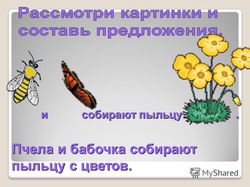 и собирают пыльцу…. и собирают пыльцу…. Пчела и бабочка собирают пыльцу с цветов.
