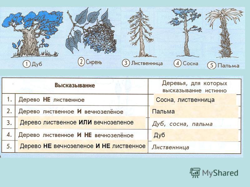 Сосна, лиственница Пальма Дерево лиственное ИЛИ вечнозеленое Дуб Дерево НЕ вечнозеленое И НЕ лиственное