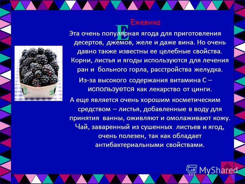 Е Ежевика Эта очень популярная ягода для приготовления десертов, джемов, желе и даже вина. Но очень давно также известны ее целебные свойства. Корни, листья и ягоды используются для лечения ран и больного горла, расстройства желудка. Из - за высокого