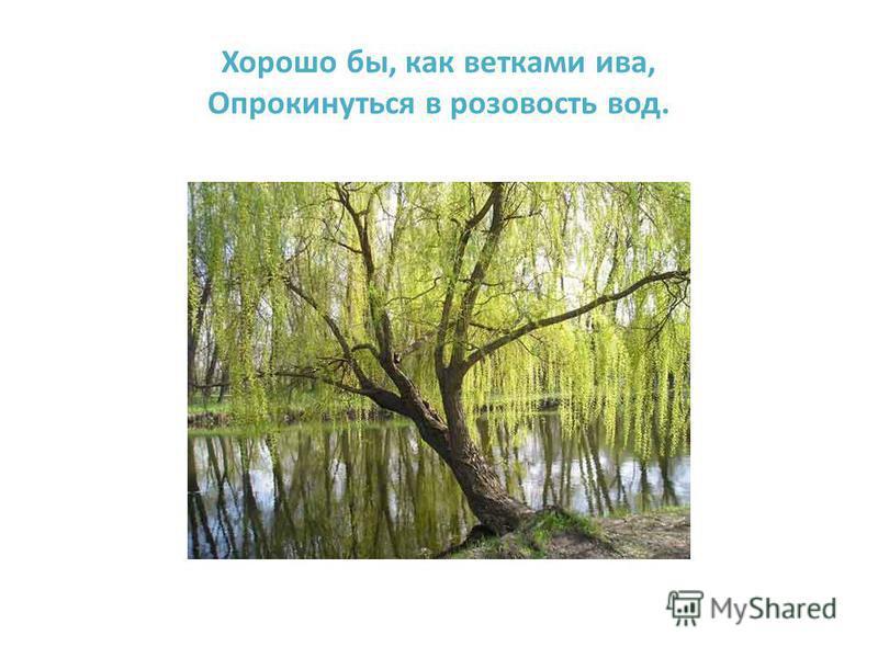 Хорошо бы, как ветками ива, Опрокинуться в розовость вод.