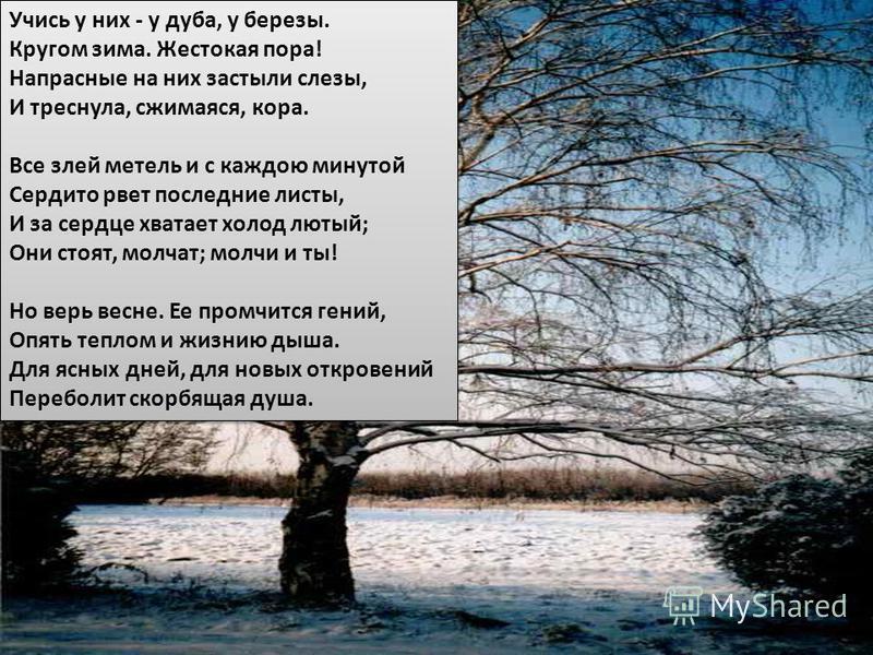 Учись у них - у дуба, у березы. Кругом зима. Жестокая пора! Напрасные на них застыли слезы, И треснула, сжимается, кора. Все злей метель и с каждою минутой Сердито рвет последние листы, И за сердце хватает холод лютый; Они стоят, молчат; молчи и ты!
