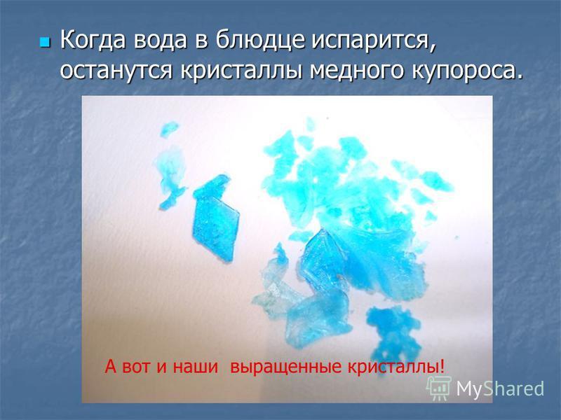Когда вода в блюдце испарится, останутся кристаллы медного купороса. Когда вода в блюдце испарится, останутся кристаллы медного купороса. А вот и наши выращенные кристаллы!