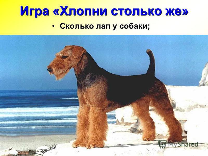 Сколько лап у собаки;Сколько лап у собаки; Игра «Хлопни столько же»