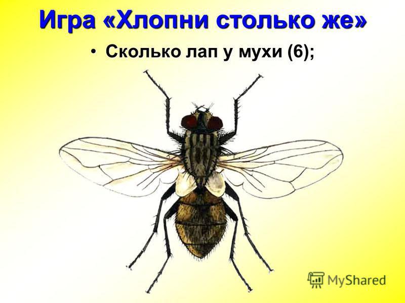 Сколько лап у мухи (6);Сколько лап у мухи (6); Игра «Хлопни столько же»