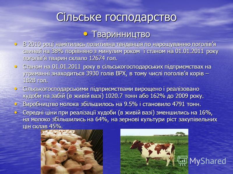 Сільське господарство Тваринництво Тваринництво В 2010 році намітилась позитивна тенденція по нарощуванню поголівя свиней на 38% порівняно з минулим роком і станом на 01.01.2011 року поголівя тварин склало 12674 гол. В 2010 році намітилась позитивна