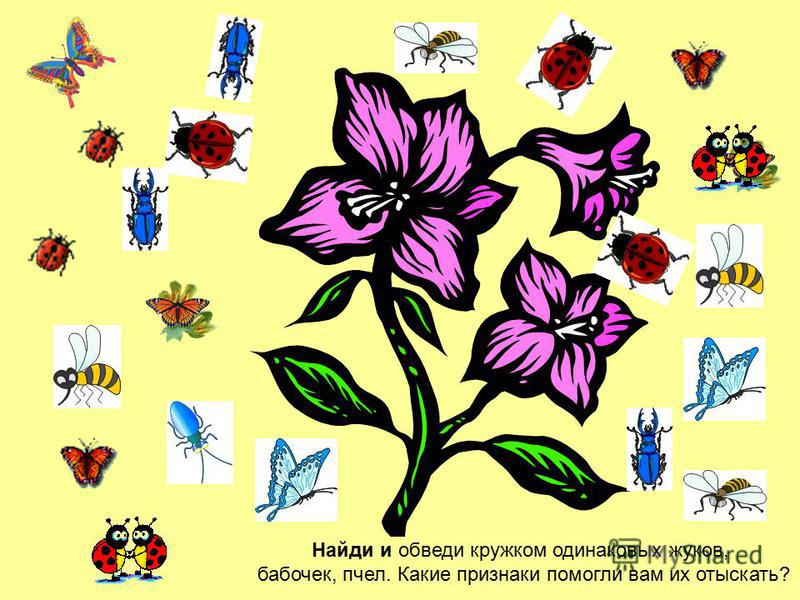 Найди и обведи кружком одинаковых жуков, бабочек, пчел. Какие признаки помогли вам их отыскать?