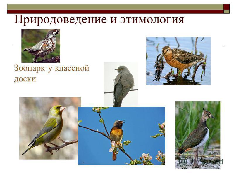 Природоведение и этимология Зоопарк у классной доски