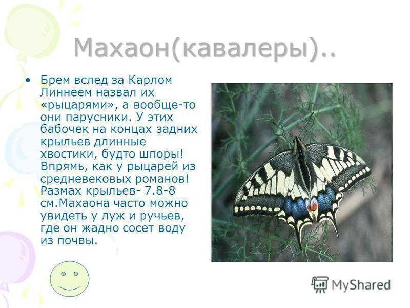Голубянка(мелеагр).. Мелеагр- небольшая относительно бабочка. Крылья самца светло- голубые с темными краями. Узнать его легко еще по угловатому краю задних крыльев на 2 и 3 жилках. Самки темнее, в некоторых случаях они темно- синие с широким черным к