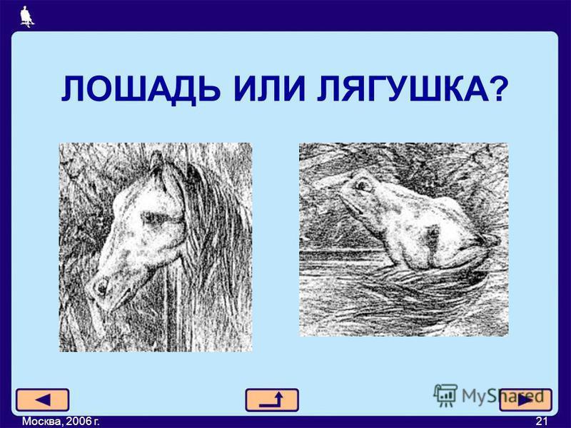ЛОШАДЬ ИЛИ ЛЯГУШКА? Москва, 2006 г.21