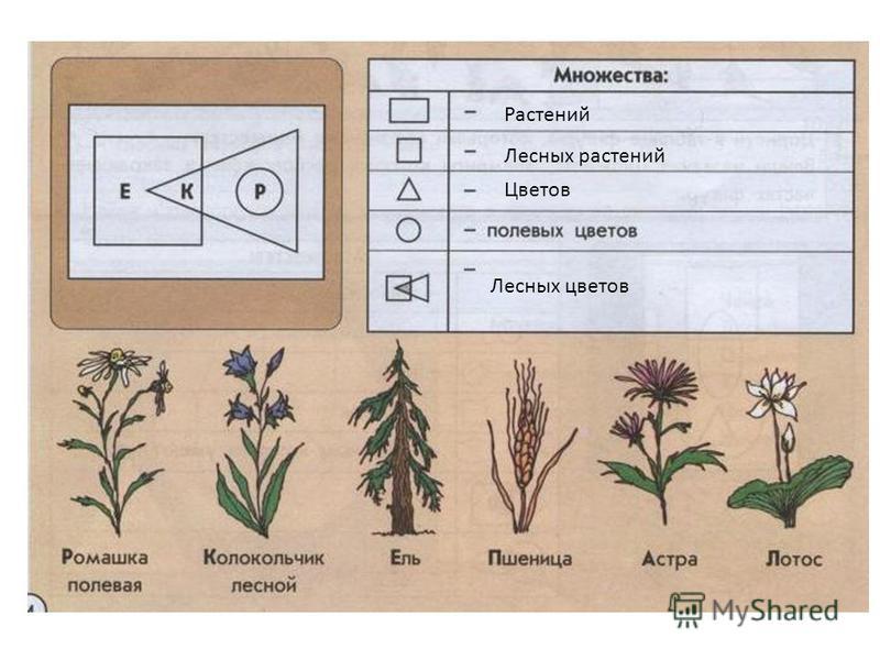 Растений Лесных растений Цветов Лесных цветов