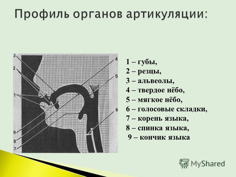 1 – губы, 2 – резцы, 3 – альвеолы, 4 – твердое нёбо, 5 – мягкое нёбо, 6 – голосовые складки, 7 – корень языка, 8 – спинка языка, 9 – кончик языка