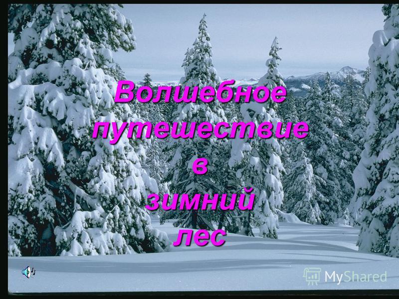 Волшебное путешествие в зимний лес