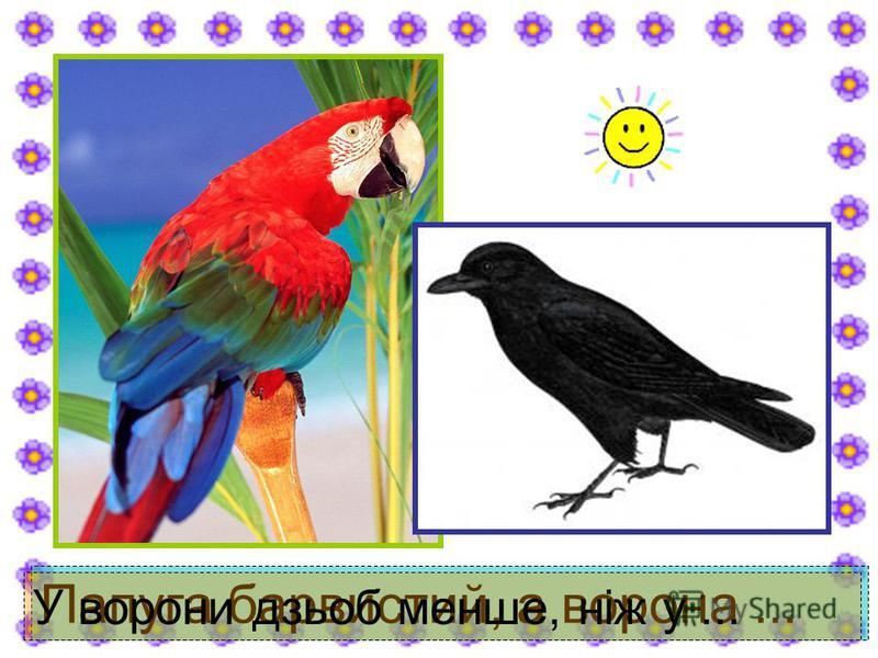 Папуга барвистий, а ворона... У ворони дзьоб менше, ніж у...