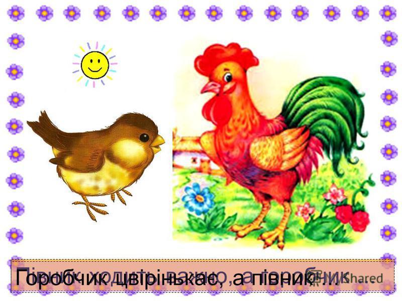Півник ходить важно, а горобчик... Горобчик цвірінькає, а півник...