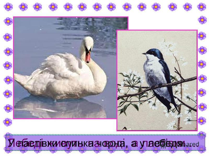 Лебеді живуть на воді, а ластівки... У ластівки спинка чорна, а у лебедя...