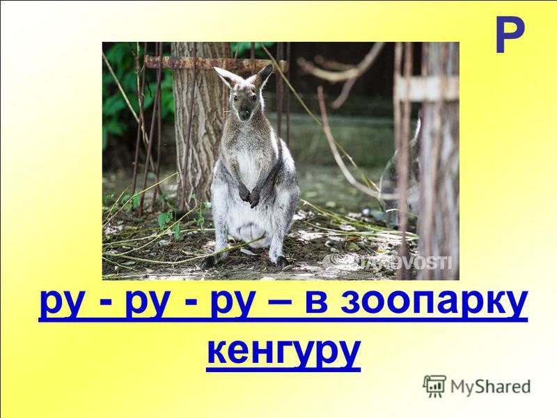 Р ру - ру - ру – в зоопарку кенгуру
