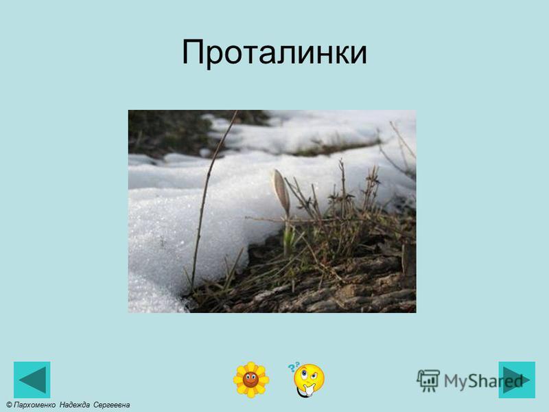 Слякоть © Пархоменко Надежда Сергеевна