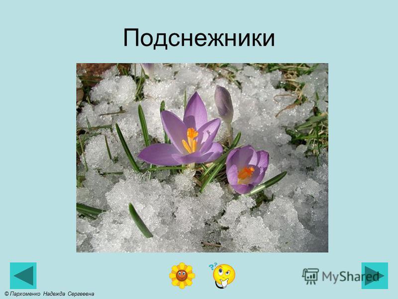 Проталинки © Пархоменко Надежда Сергеевна