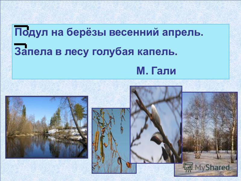 Подул на берёзы весенний апрель. Запела в лесу голубая капель. М. Гали