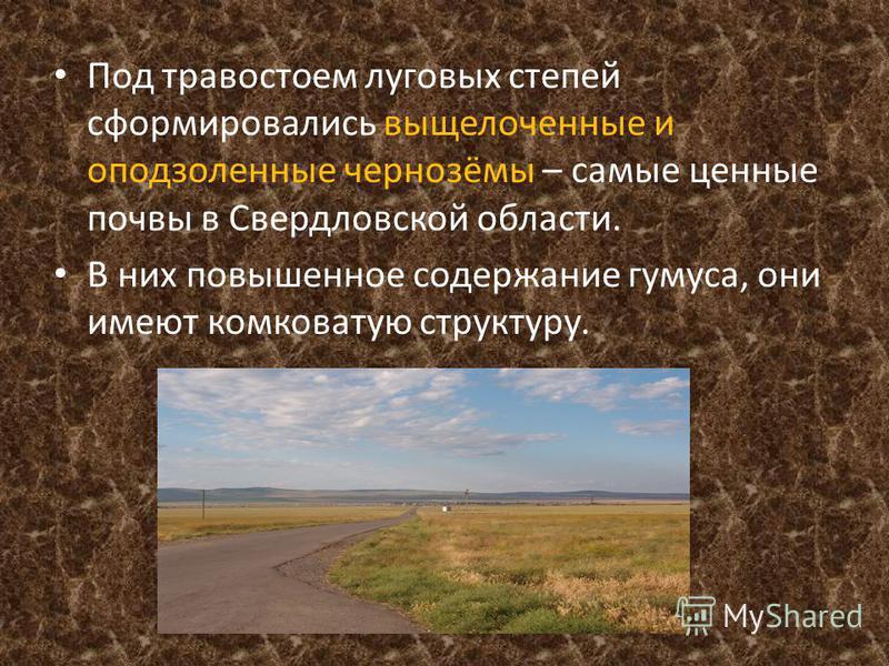 Под травостоем луговых степей сформировались выщелоченные и оподзоленные чернозёмы – самые ценные почвы в Свердловской области. В них повышенное содержание гумуса, они имеют комковатую структуру.