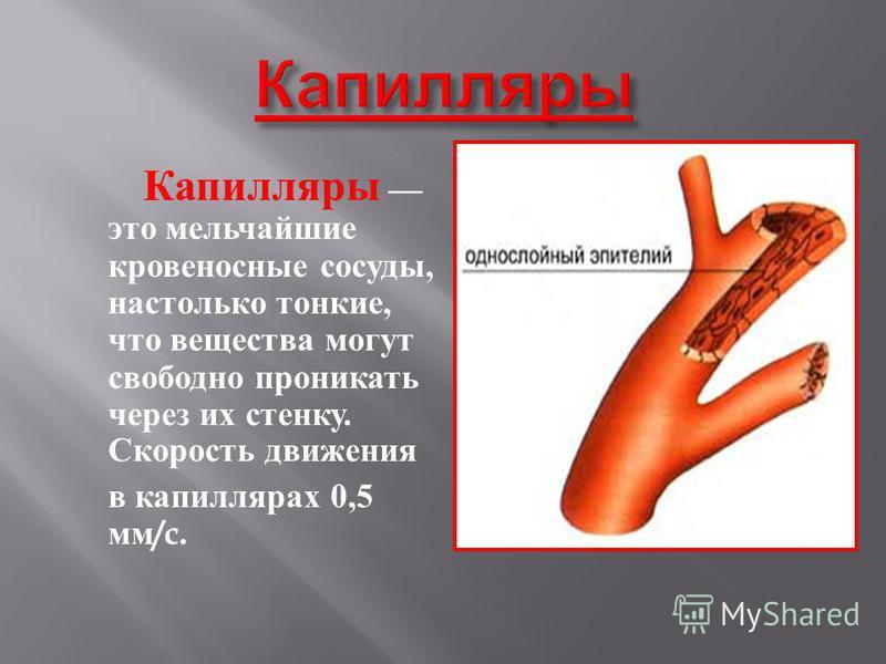 Капилляры это мельчайшие кровеносные сосуды, настолько тонкие, что вещества могут свободно проникать через и х с тенку. Скорость движения в капиллярах 0,5 мм /c.