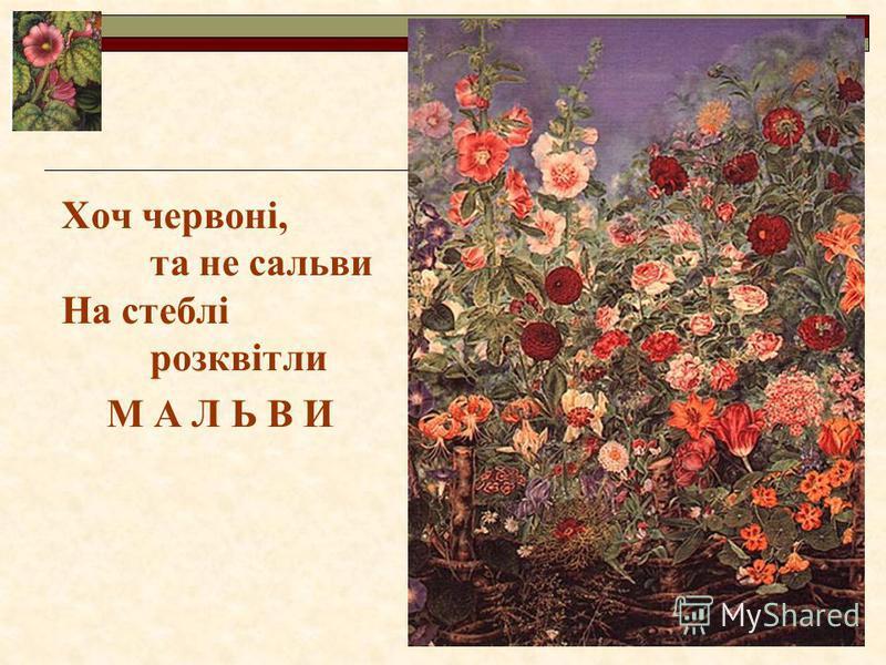 Хоч червоні, та не сальви На стеблі розквітли М А Л Ь В И