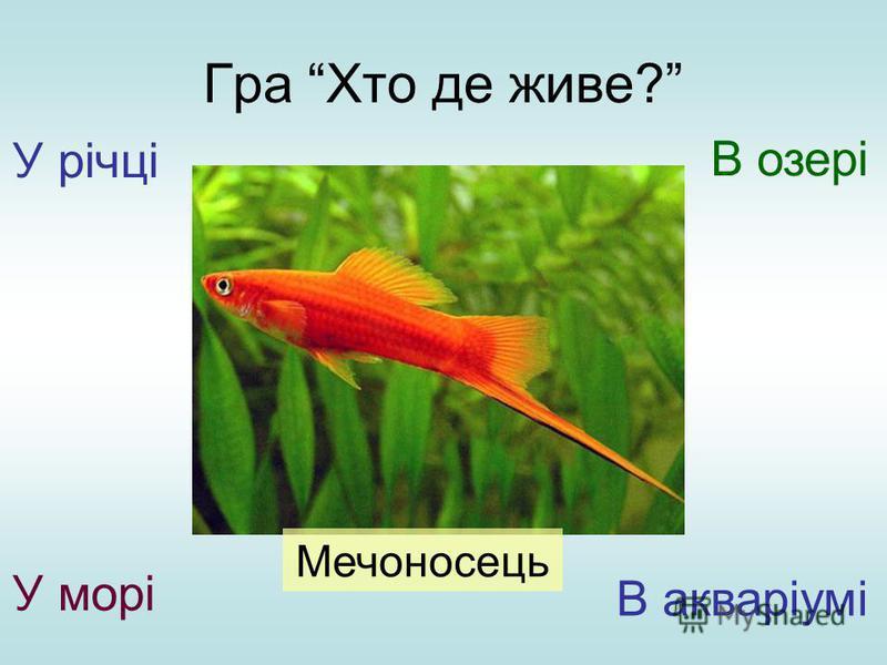 Гра Хто де живе? У річці У морі В озері В акваріумі Мечоносець