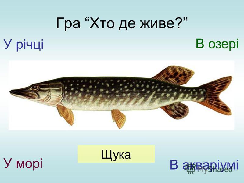 Гра Хто де живе? У річці У морі В озері В акваріумі Щука