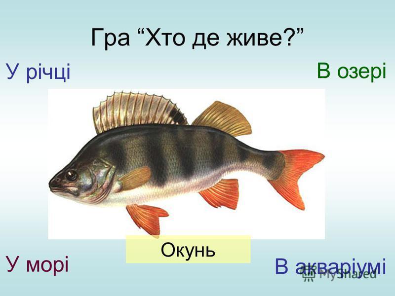 Гра Хто де живе? У річці У морі В озері В акваріумі Окунь