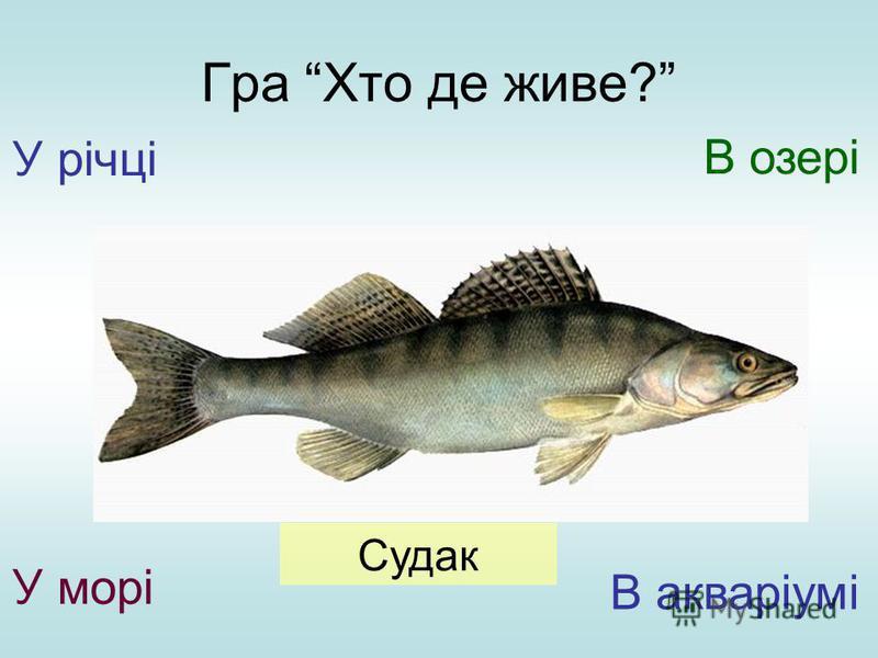 Гра Хто де живе? У річці У морі В озері В акваріумі Судак