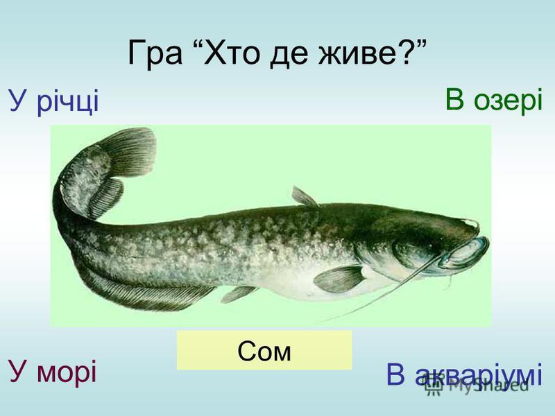 Гра Хто де живе? У річці У морі В озері В акваріумі Сом