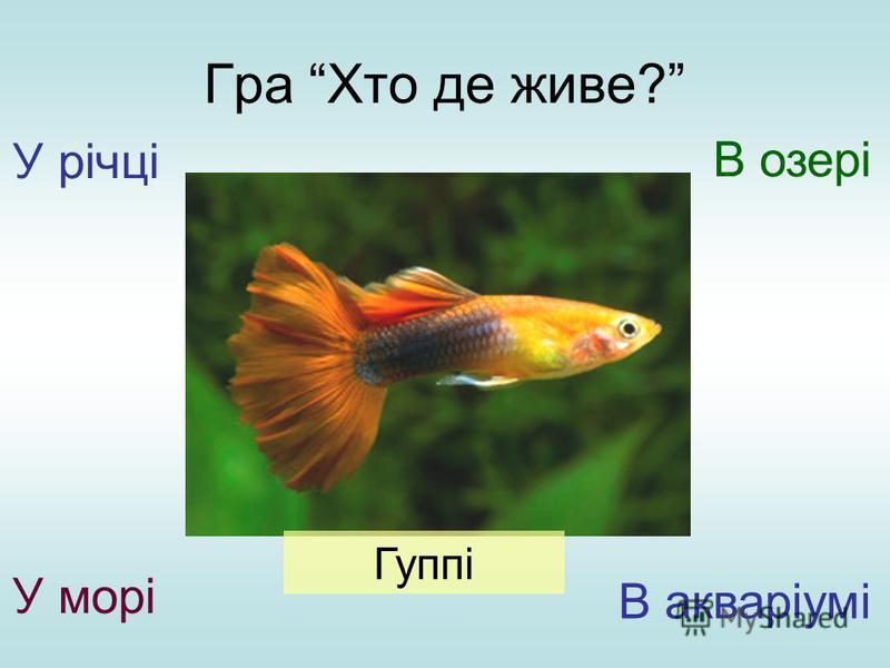 Гра Хто де живе? У річці У морі В озері В акваріумі Гуппі