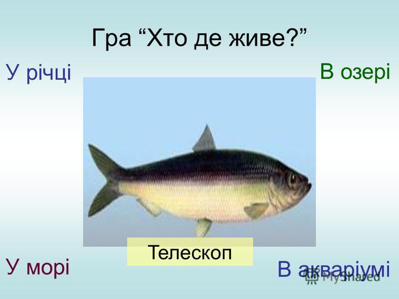 Гра Хто де живе? У річці У морі В озері В акваріумі Телескоп